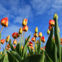 scent marketing flowers jpg